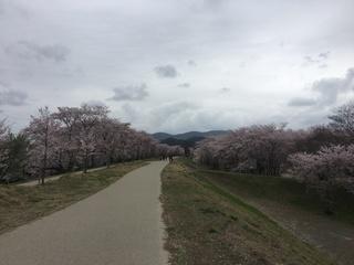 写真 2017-04-10 14 48 08.jpg